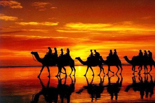 camel_train_australia